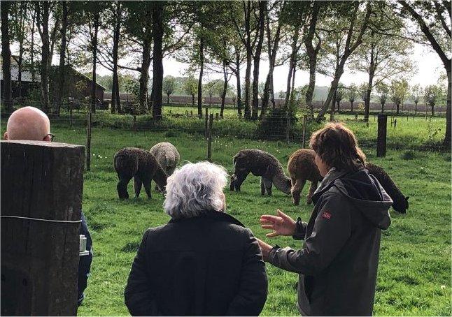 alpaca-achterhoek-greet-meet