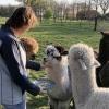alpaca-achterhoek-workshop-veerkracht-training