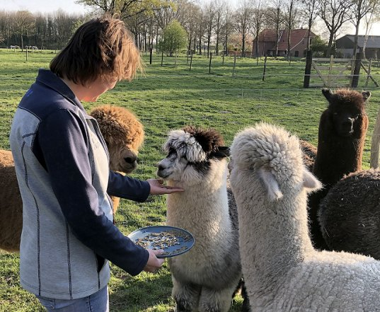 alpaca-achterhoek-workshop-veerkracht-training