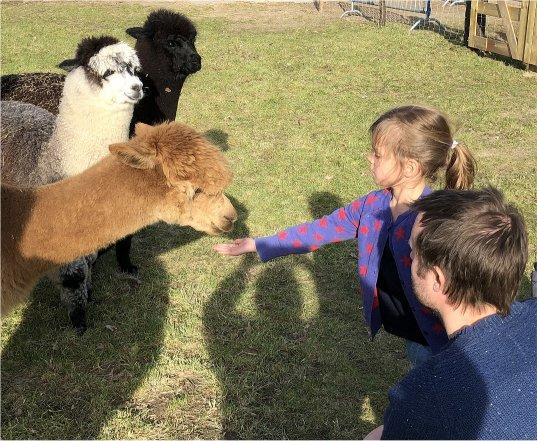 alpaca-bezoeken-achterhoek