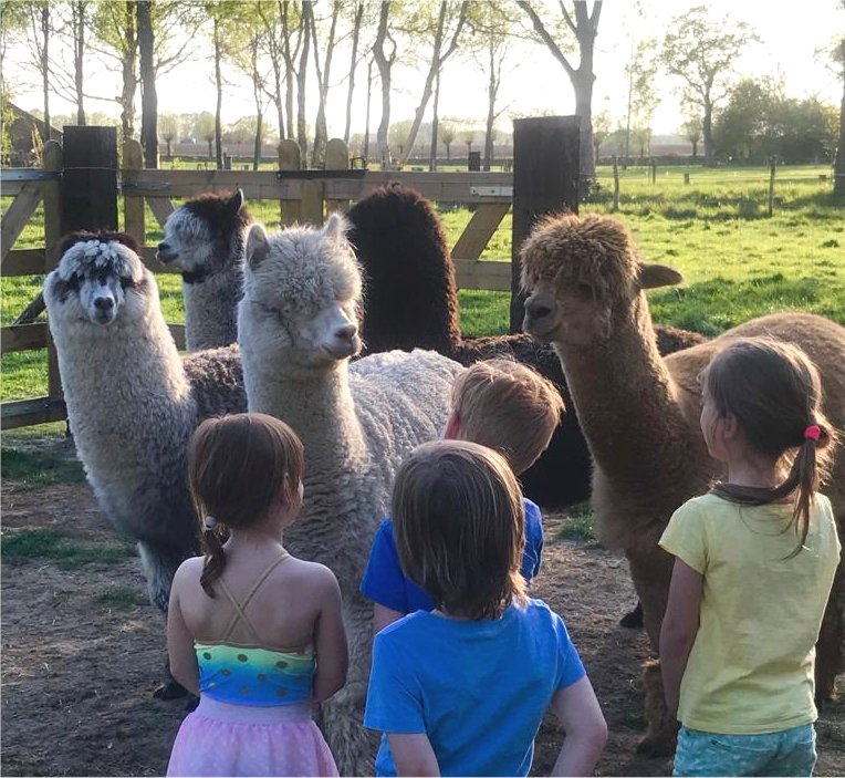 alpaca's, ontmoeten, meet, greet, achterhoek, kinderen