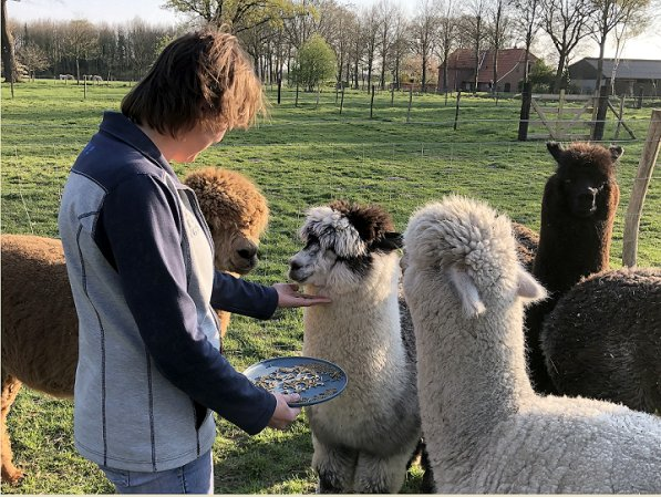 alpaca, meet and greet, therapy sessions