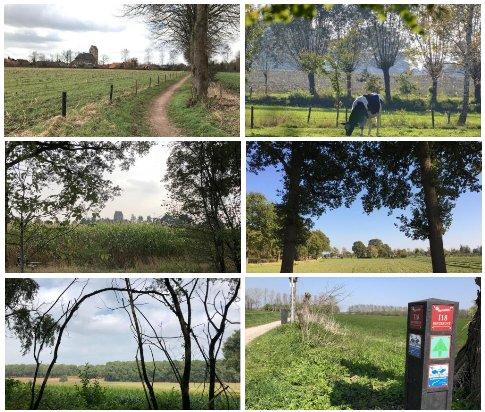 alpaca boerderij, achterhoek, gelderland