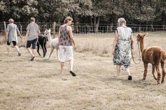 alpaca 1 on 1, netherlands, achterhoek