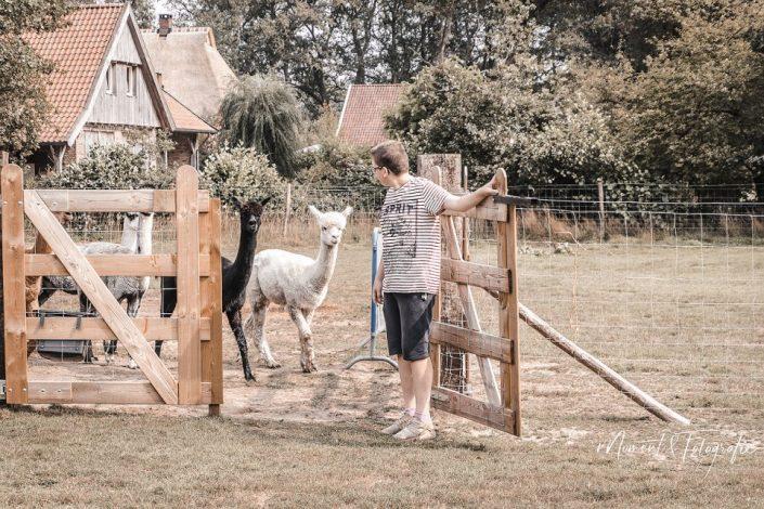 alpaca meet and greet, netherlands