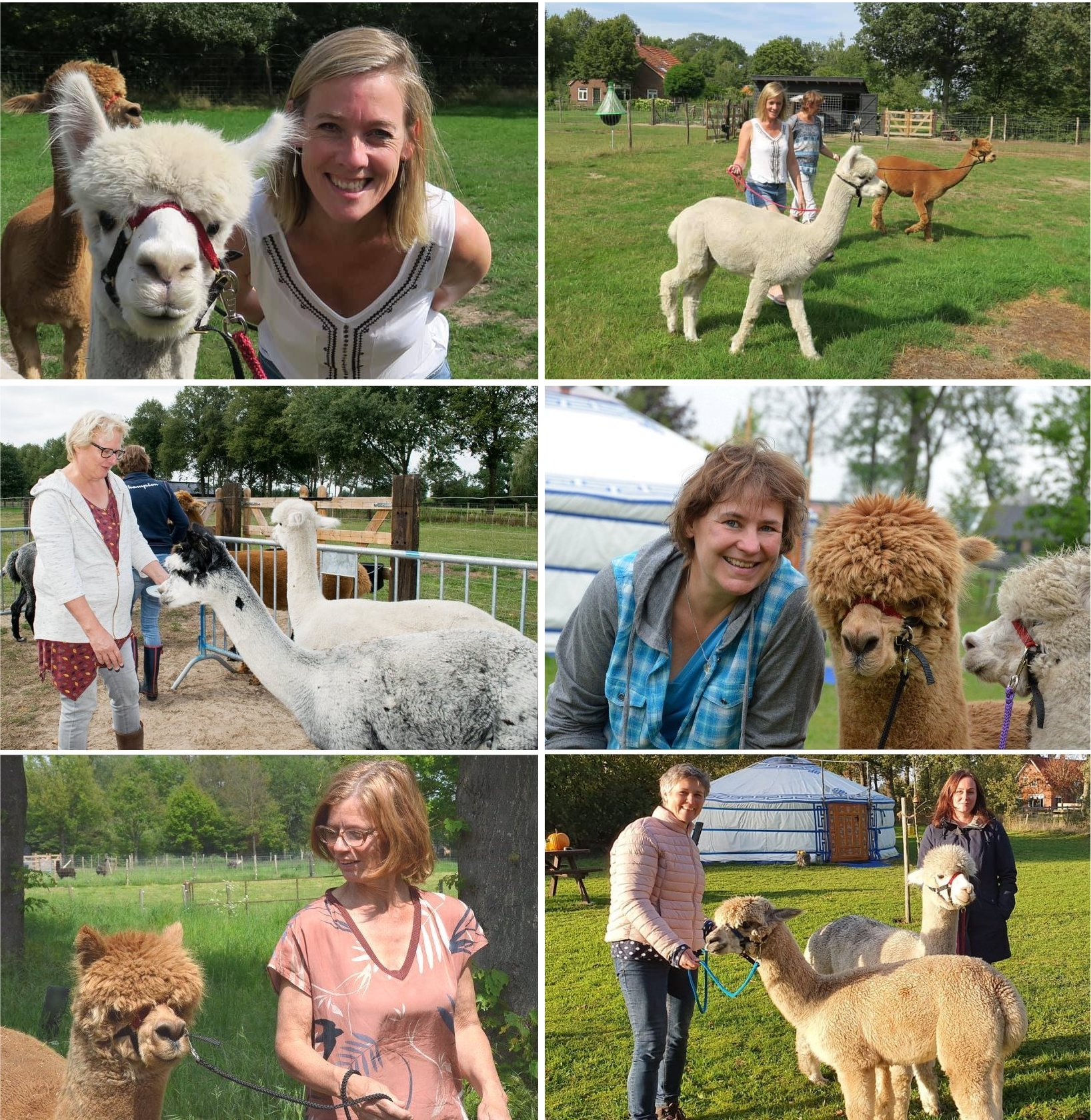 meet and greet, alpaca, achterhoek, gelderland, netherlands, walking