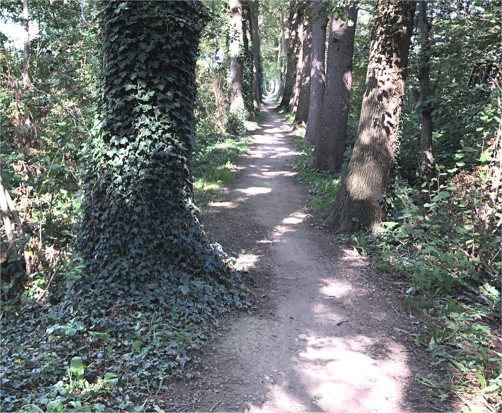 rotmansdiekske-geesteren-borculo