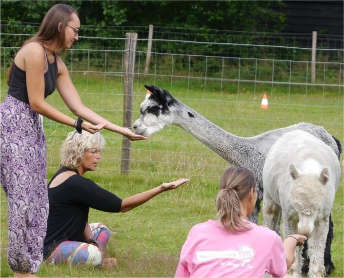 alpaca-yoga-achterhoek