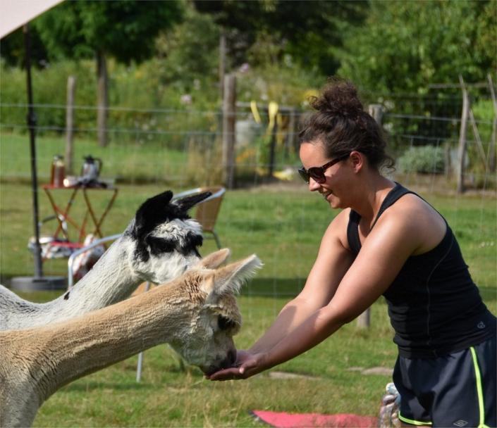 yoga-in-de-achterhoek-alpacas-gelderland