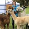 yurt-achterhoek-bijzondere-bed-and-breakfast-alpaca-meet-and-greet-gelderland
