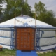 yurt-bed-and-breakfast-alpaca-meet-and-greet-achterhoek-gelderland