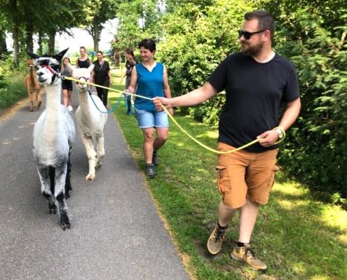 alpaca-uitje-achterhoek-gelderland-juli-2021