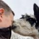 alpaca-knuffelen-achterhoek-gelderland
