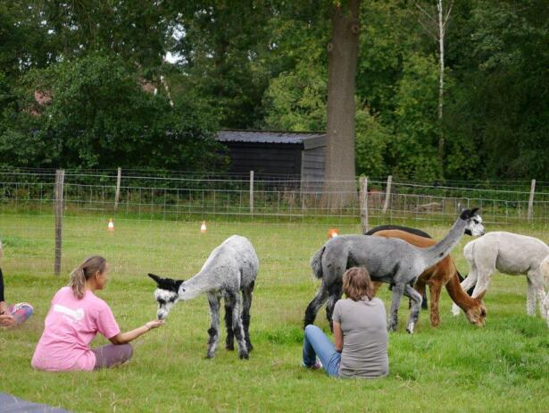 yoga-tussen-alpacas-achterhoek-borculo-lochem-diepenheim-0