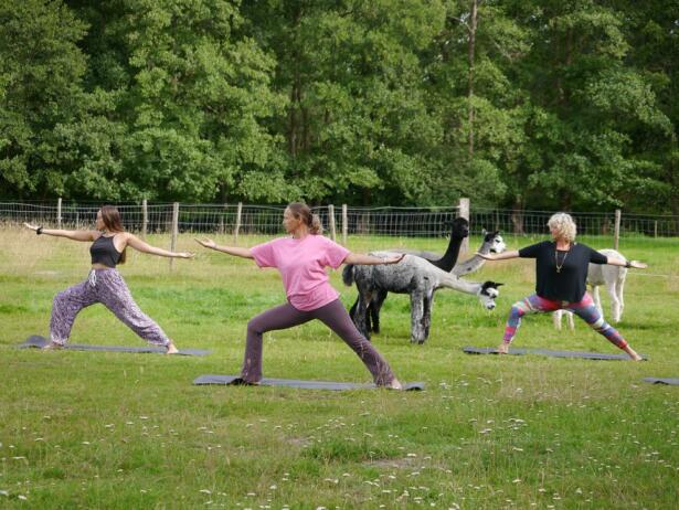 yoga-tussen-alpacas-achterhoek-borculo-lochem-diepenheim-3